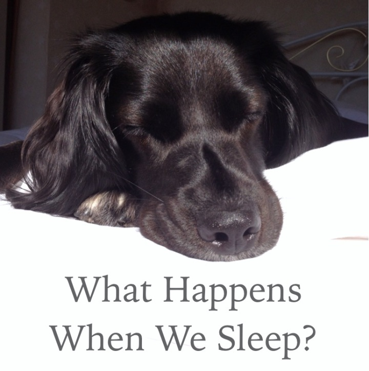 What Happens When We Sleep?